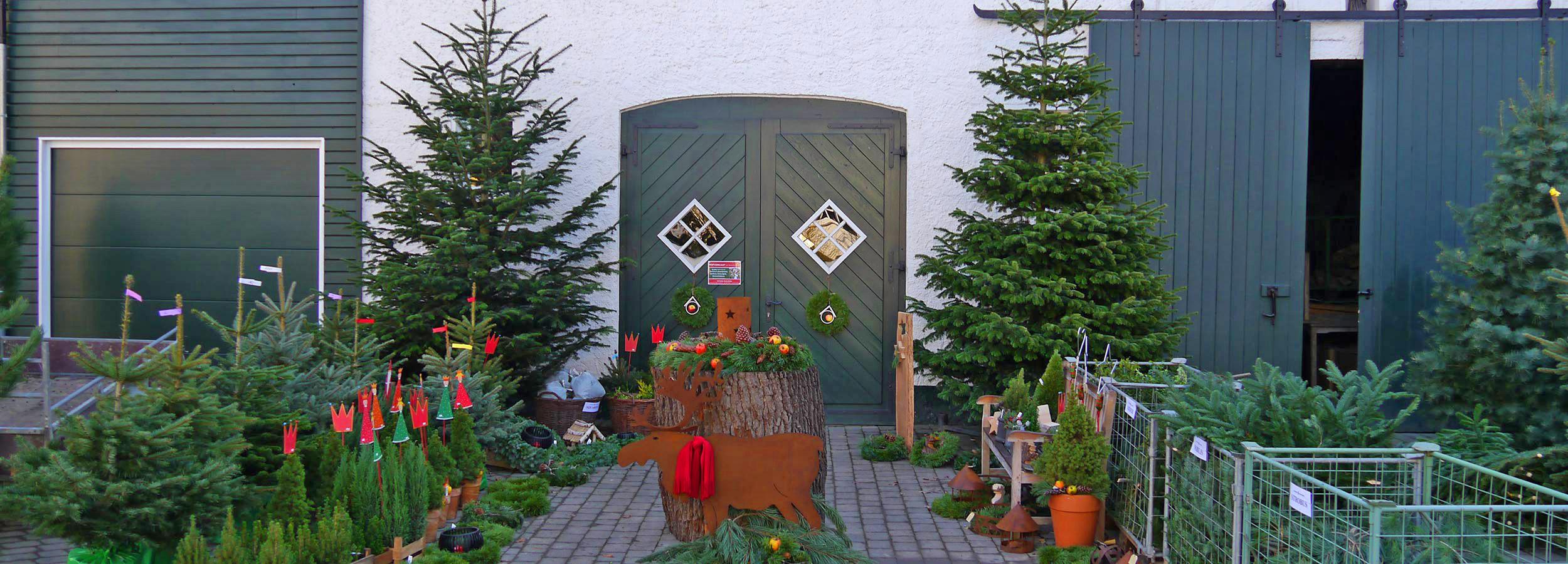winter_wunder_welt_weihnachtsbaeume_kaufen_002